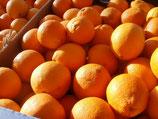 Orange Navelline bio