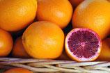 Orange Moro (sanguine) bio