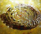 Drops Ammonit