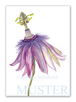 Kunstkarte Passionsblume Artikelnr. sr108