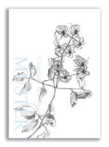 Kunstkarte Federblüten Artikelnr. b104