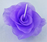 Rosenblüte Lila