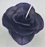 Rosenblüte Schwarz