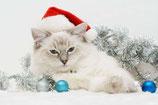 Weihnachten 9
