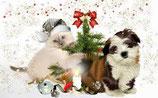 Weihnachten 21