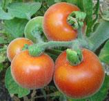 "Tomate ""Hygora"""