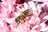 (Frühlings)Blütenhonig im 400 g Honig-Fertigversand-Beutel