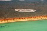 Shark Bay - 3184