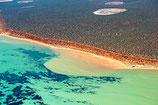 Shark Bay - 3187