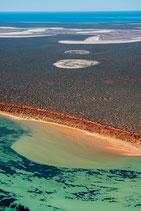 Shark Bay - 3189