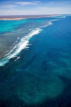 Coral Bay - 4621