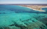 Shark Bay - 4634