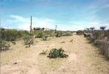 2007 Dorfgemeinschaft Endamarariek