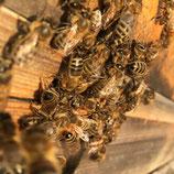 Orientierungskurs Bienenhaltung