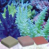 Korallenzucht Automatic Elements Eisen Konzentrat