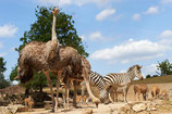A New Kind of Zoo Experience - ZOOM-Erlebniswelt, Gelsenkirchen