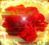 Rose of Love - Auf ewig Dein