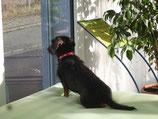Hundewasserbett verschiedene Größen mit und ohne Heizung