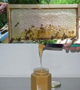 Honiglehrgang DIB online mit Zertifikat