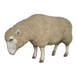 Figura de oveja pastando | réplicas de animales domésticos - decoración temática