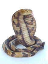 Réplica de serpiente cobra