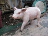 Réplica de Cerdito | Figuras de cerdos - Decoración temática