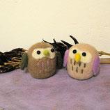 まん丸フクロウ2種