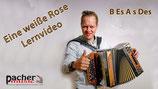Eine weiße Rose B Es As Des