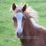 Pony Poster 002
