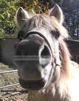 Pony Poster 004