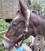 Pony Poster 003