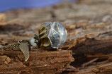 EINZELSTÜCK - Pusteblumenschirmchen in Kunstharz eingegossen - 1.6 cm Nr. 678