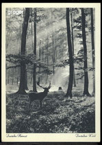 AK Stimmungsbild Deutscher Wald     61/44