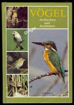 Vögel beobachten und bestimmen