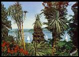 AK  Insel Mainau im Bodensee, Dracaenengeuppe   70/42