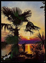 AK  Insel Mainau im Bodensee, Tropischer Zauber   70/45