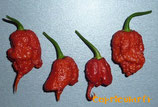 7 Pot Primo - Sachet 10 graines