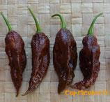 Bhut Jolokia Chocolat - Sachet 10 graines