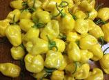 Habanero Jaune - Sachet 10 graines