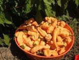 Bhut Jolokia Peach - Sachet 10 graines