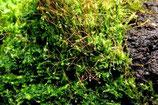 Dwars door het paludarium mos