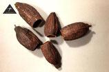 Cacaoboon circa 9 - 12 cm lang.