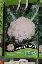 "Chou-fleur ""Toutes saisons"
