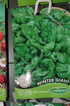 "Épinards ""Winter Giant"""