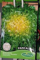 """Chicorée """"Pancalieri"""""""