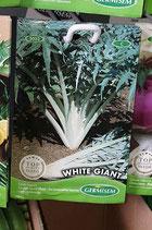 """Cardon """"White Giant"""""""