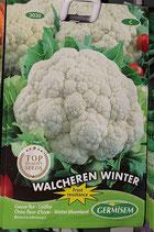 "Chou-fleur d'hiver ""Walcheren winter"""