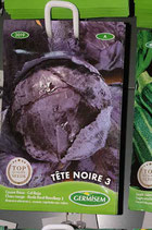 """Chou """"Tête noire 3"""""""