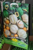 Physalis Pruinosa
