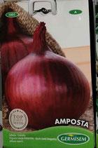 """Oignons """"Amposta"""""""